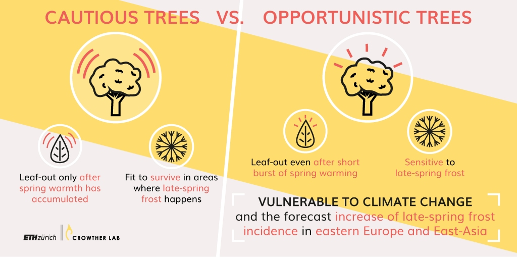 Through evolution trees have developed strategies to adapt to their climate condition but climate change might put them at greater risk of frost .